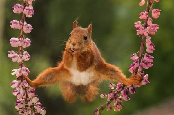 4-animali-buffi-divertenti-comedy-wildlife-photography-awards-2018-cv-700x462_GF.jpg