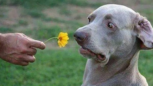 6-cani-buffi-e-divertenti-compilat_GF.jpg