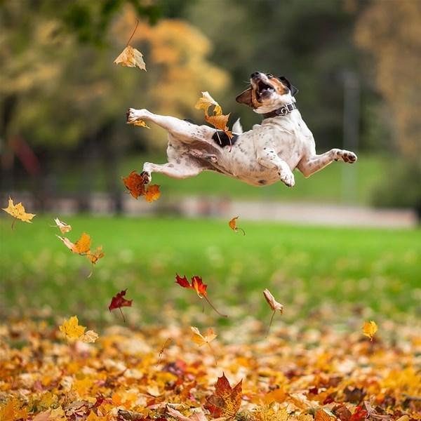 7-autumn-animals-16__880_GF.jpg