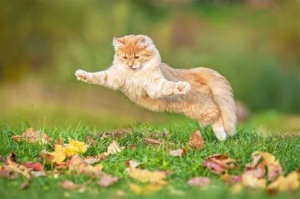 8-grigorita-ko-funny-cat-flying-in-the-air-in-autumn_a-G-15347333-14258384_GF.jpg