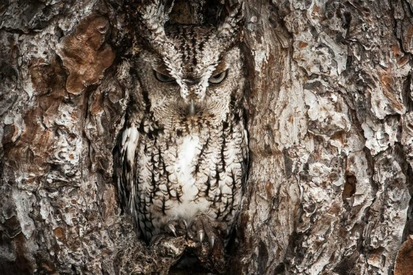 1-camouflaged-animals-1556947.jpg