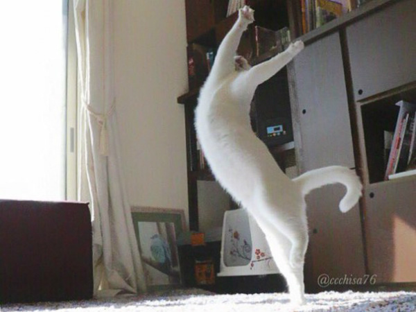 1-cat7.jpg