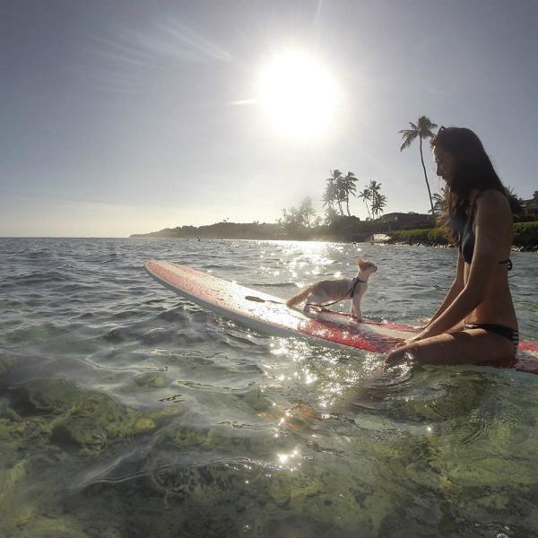 1-gatto-ama-mare-e-surf-5.jpg