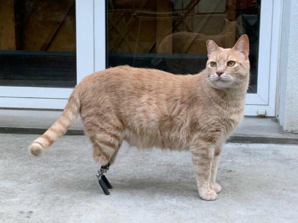 1-gatto-vito-5.jpg