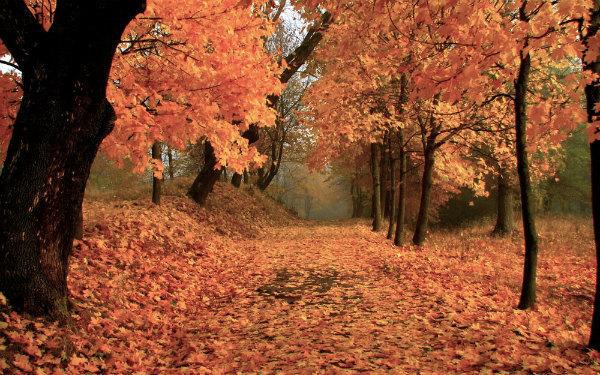 10-foliage-calabria.jpg
