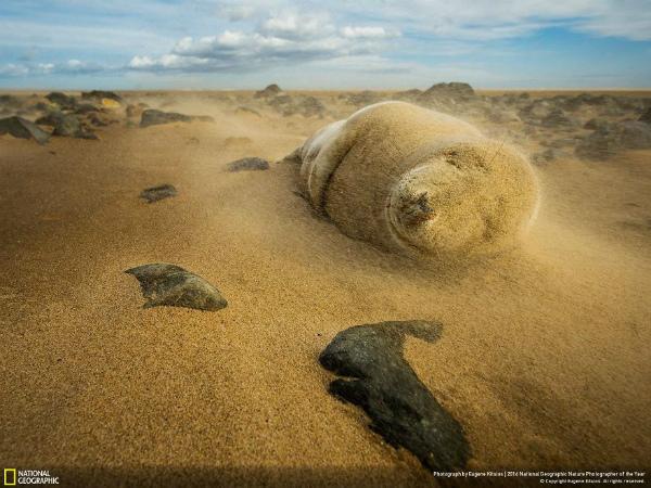 10-foto-animali-tormenta-di-sabbia.jpg