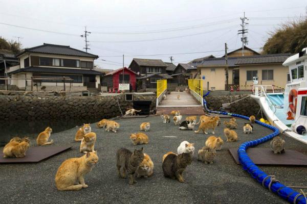 10-gatti-giappone-1.jpg