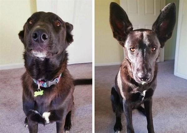 11-Un cane che sembra due cani differenti_GF.jpg