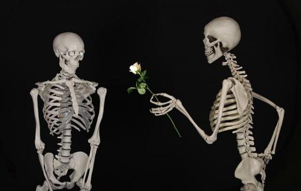 12-scheletro-umano.jpg