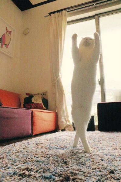 2-cat1.jpg