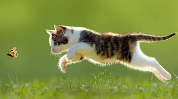2-gatto-618080.660x368.jpg