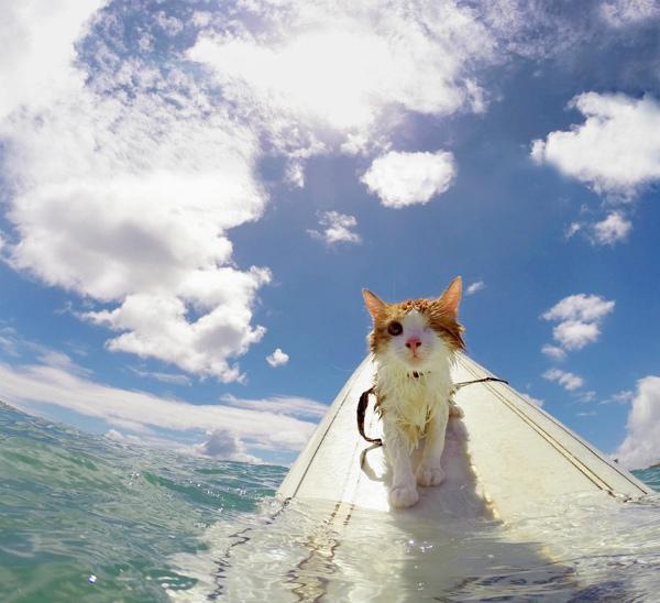 2-gatto-ama-mare-e-surf-2.jpg