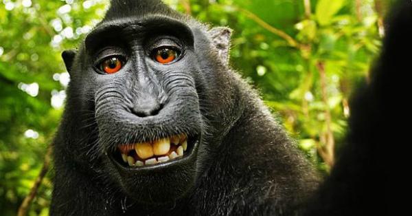 +selfie-macaco-indonesiano.jpg