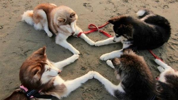 3-cani-pazzi-cani-divertenti-pro-1.jpg