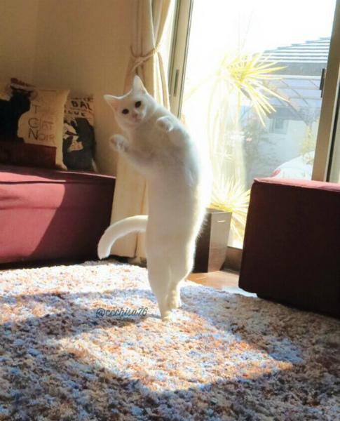 3-cat5.jpg