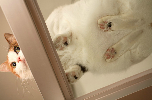 3-gatto-111.jpg