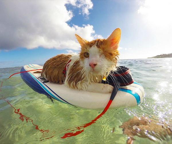 3-gatto-ama-mare-e-surf-1.jpg