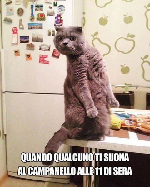 3-gatto-tavolino-sguardo-spaventato.jpg