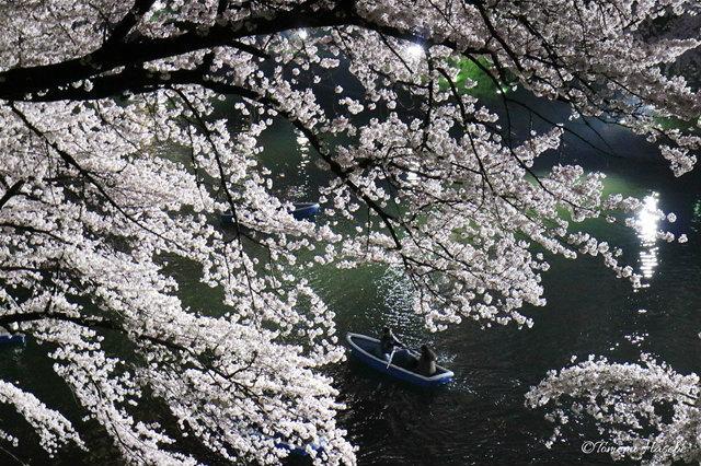 34-Sakura 2016 IMG_3154_GF.jpg