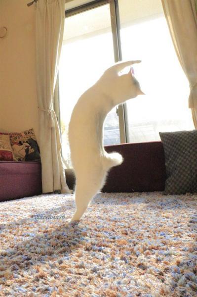 4-cat2.jpg