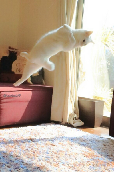4-cat3.jpg
