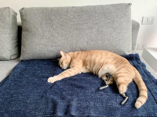 4-gatto-vito-3.jpg