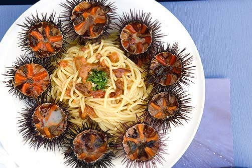 4-urchins_spaghetti.jpeg