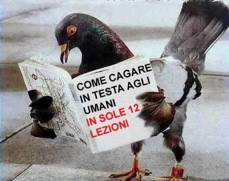 5-Piccione_legge_manuale_su_come_cagare_in_testa_agli_umani.jpg