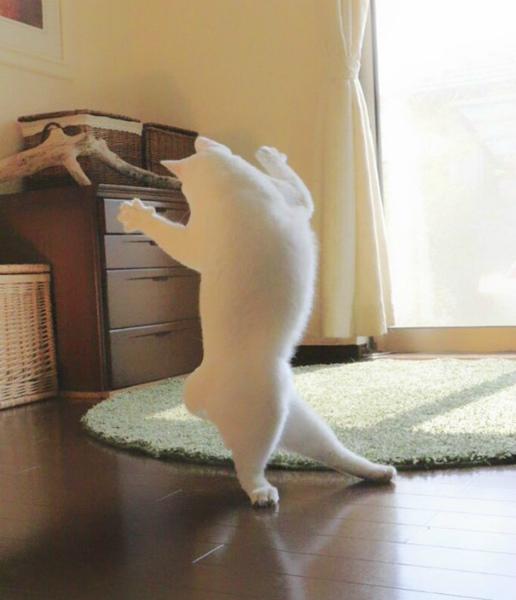 5-cat6.jpg