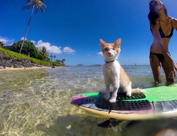 5-gatto-ama-mare-e-surf-4.jpg