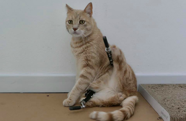 5-gatto-vito-4.jpg