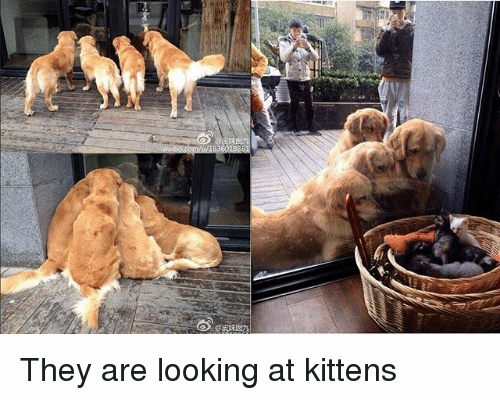 5-they-are-looking-at-kittens-25700871.jpg