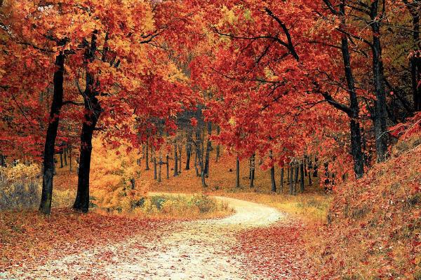 6-foliage-italia-colli-euganei.jpg
