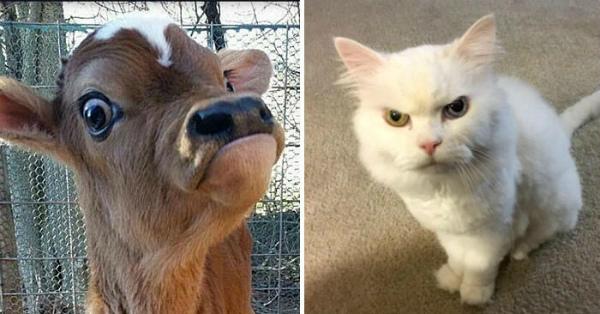 6-foto-divertenti-animali-espressivi-cv.jpg