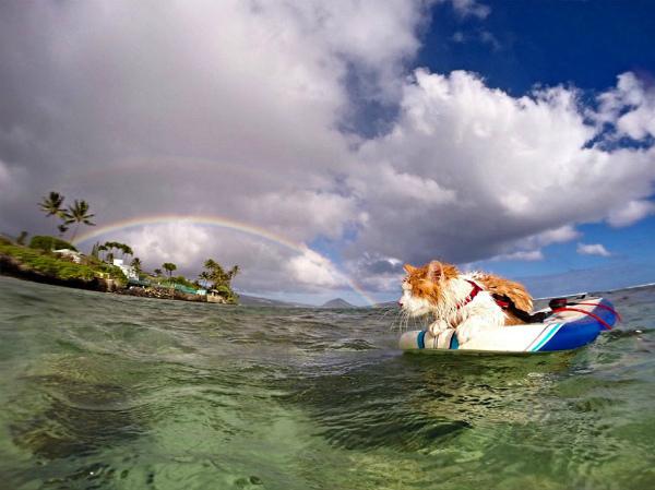 7--gatto-ama-mare-e-surf-7.jpg