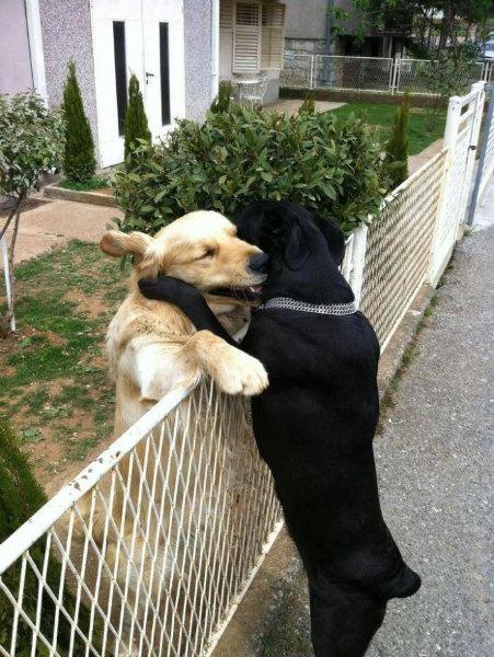 7-1385-cani-abbracciano.jpg