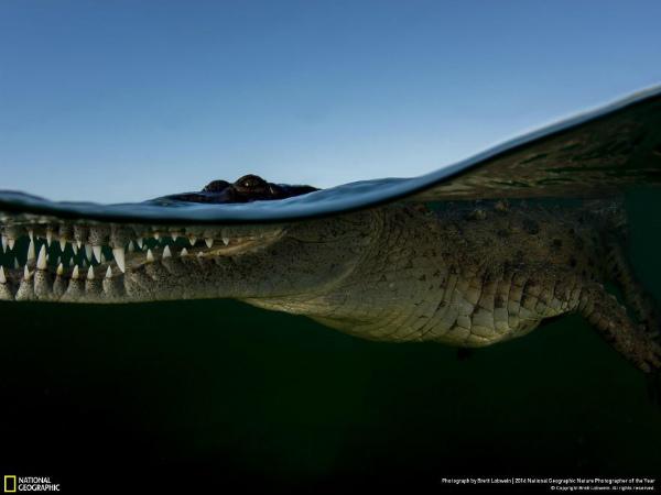 7-foto-animali-coccodrillo-a-pelo-d-acqua.jpg