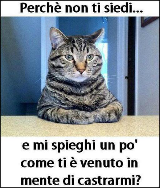 7-gatto-castrato.jpg