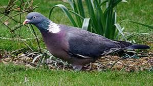 7-piccione (4).jpg