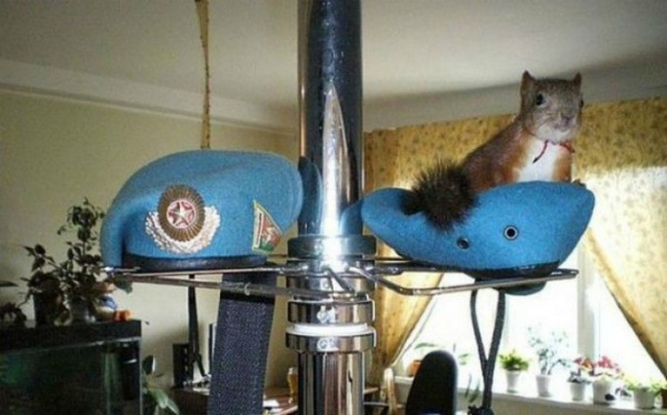 7-scoiattolominsk-a-casa.jpg