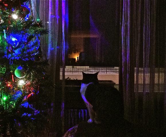 7-spinta attende il Natale.jpg