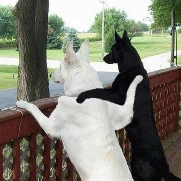 8-amicizia-tra-cani.jpg