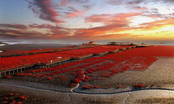8-panjin_red_beach_landscape_wallpaper-other.jpg