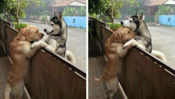 9-Messy-e-Audi-i-cani-si-abbracciano.jpg