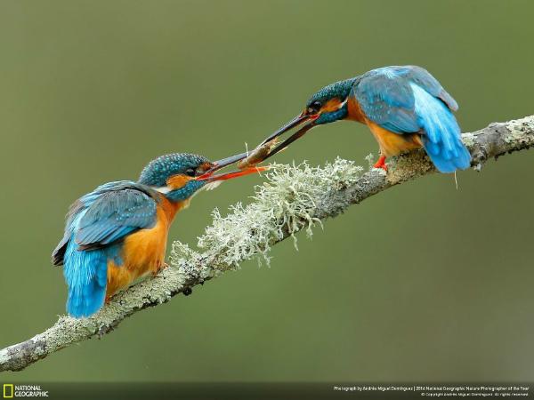 9-foto-animali-scambio-di-cibo.jpg