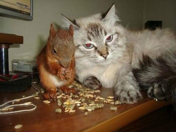 9-scoiattolo-minsk-con-gatto.jpg