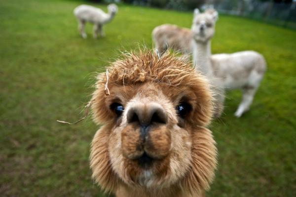 9-selfie-con-capello-appena-fatto.jpg