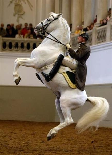 cavallo_GF.jpg