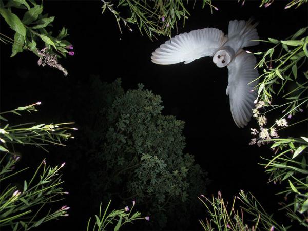 foto-incredibile-uccello-2.jpg