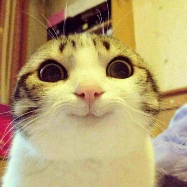gatto.jpg